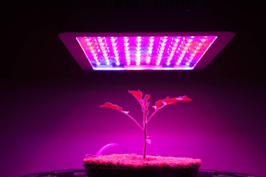 LED providing artificial light for photosynthesis