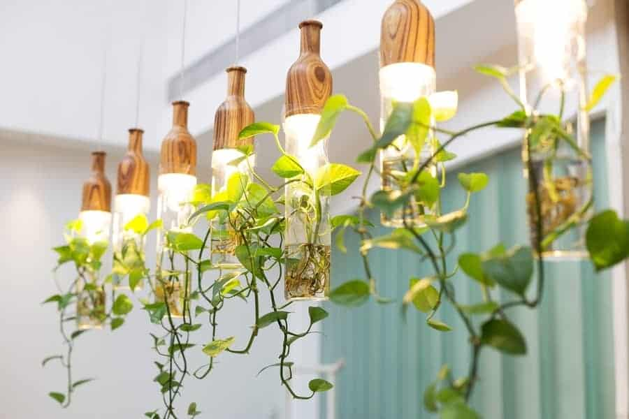 Indoor plants using artificial light source for photosynthesis