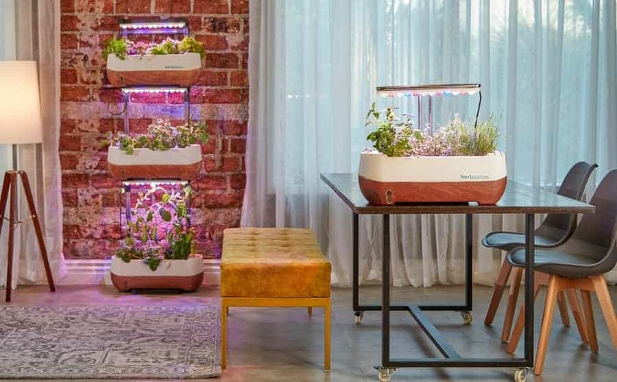 Growing indoor plants with grow lights within home.