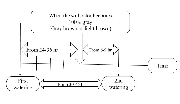 Image showing Watering Frequency for Light Drying