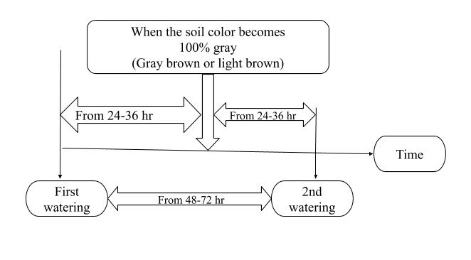 Image showing Watering Frequency for Strong Drying