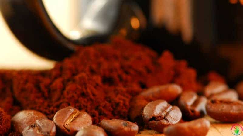 Coffee ground for  pothos plant.