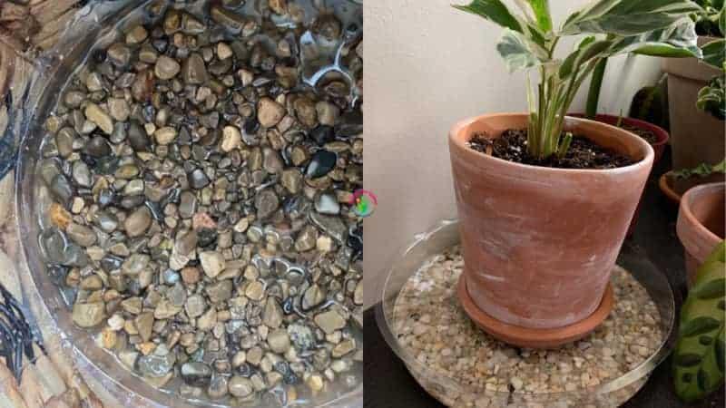 Pebble Tray Humidifier For Plants