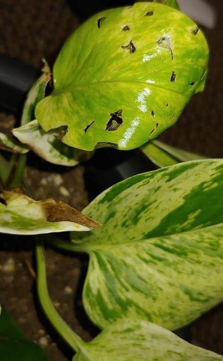 Irregular Holes on Leaves
